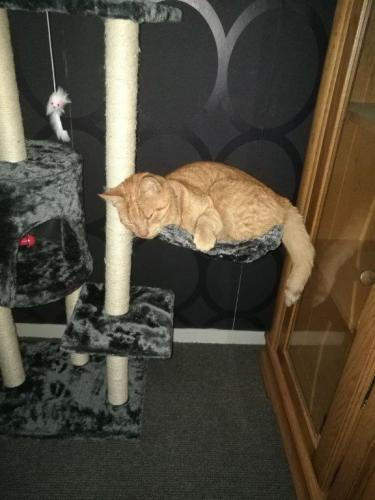 Garfield, Kesteren