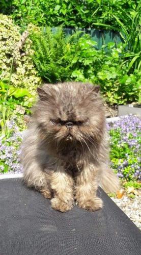 Grumpy, Ommeren