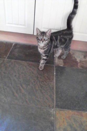Kitty, Wamel