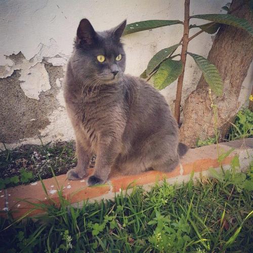 Spencer, Meteren